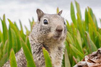 18 fascynujących ciekawostek o wiewiórkach