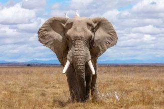12 informacji i ciekawostek o słoniach dla dzieci