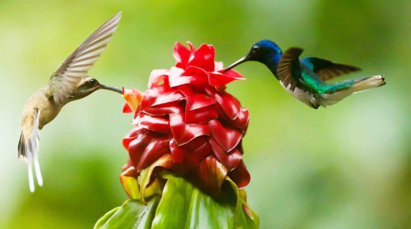 dwa koliberki i kwiat