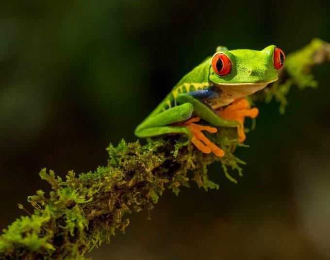 zielona skóra żaby